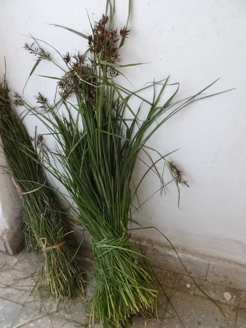 bundle of the festival grass